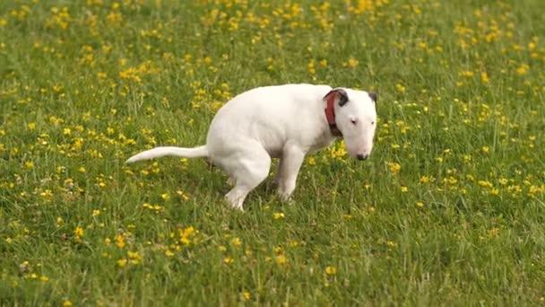 Psí hovna na trávě