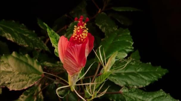 červená květina, kvetoucí