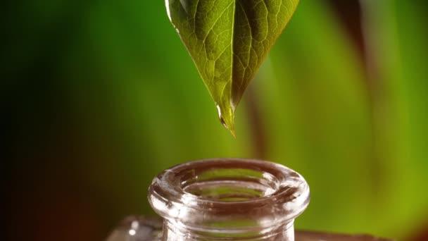 Kapka oleje padá z listí