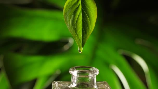 Olej nebo kapka vody kapající z listí do láhve