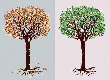 deciduous tree in the different seasons