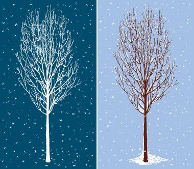deciduous tree in december