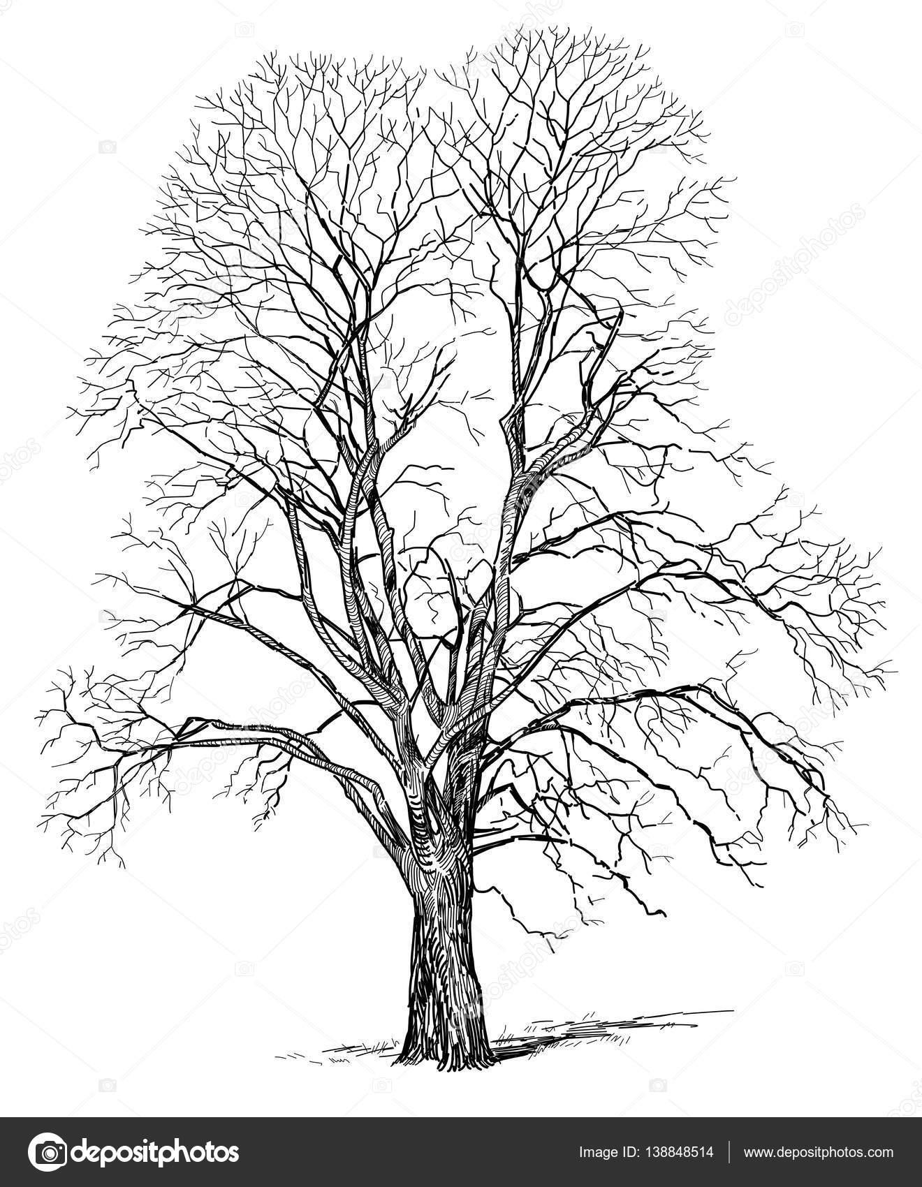 Dibujos Arbol En Invierno Dibujo Dibujo De Un árbol En Invierno