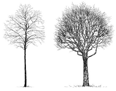 sketches of the trees without leaves