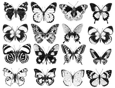sketches of the butterflies silhouettes