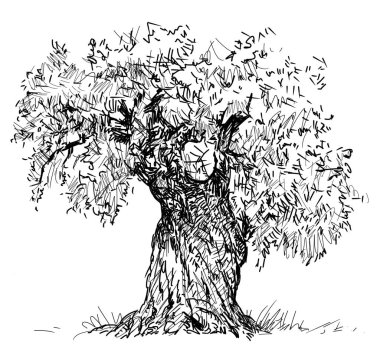 Sketch of an old olive tree