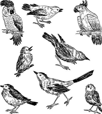 sketches of the different wild birds