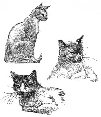 sketches of the house cat