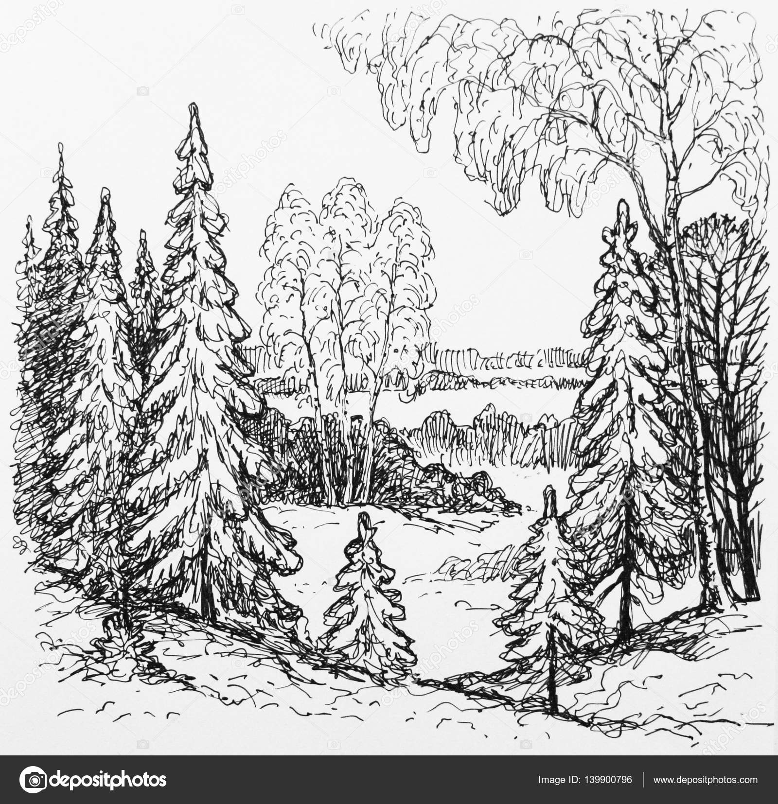 Pictures Sketches A Forest Sketches Of The Forest Trees Stock Photo C Mubaister Gmail Com 139900796