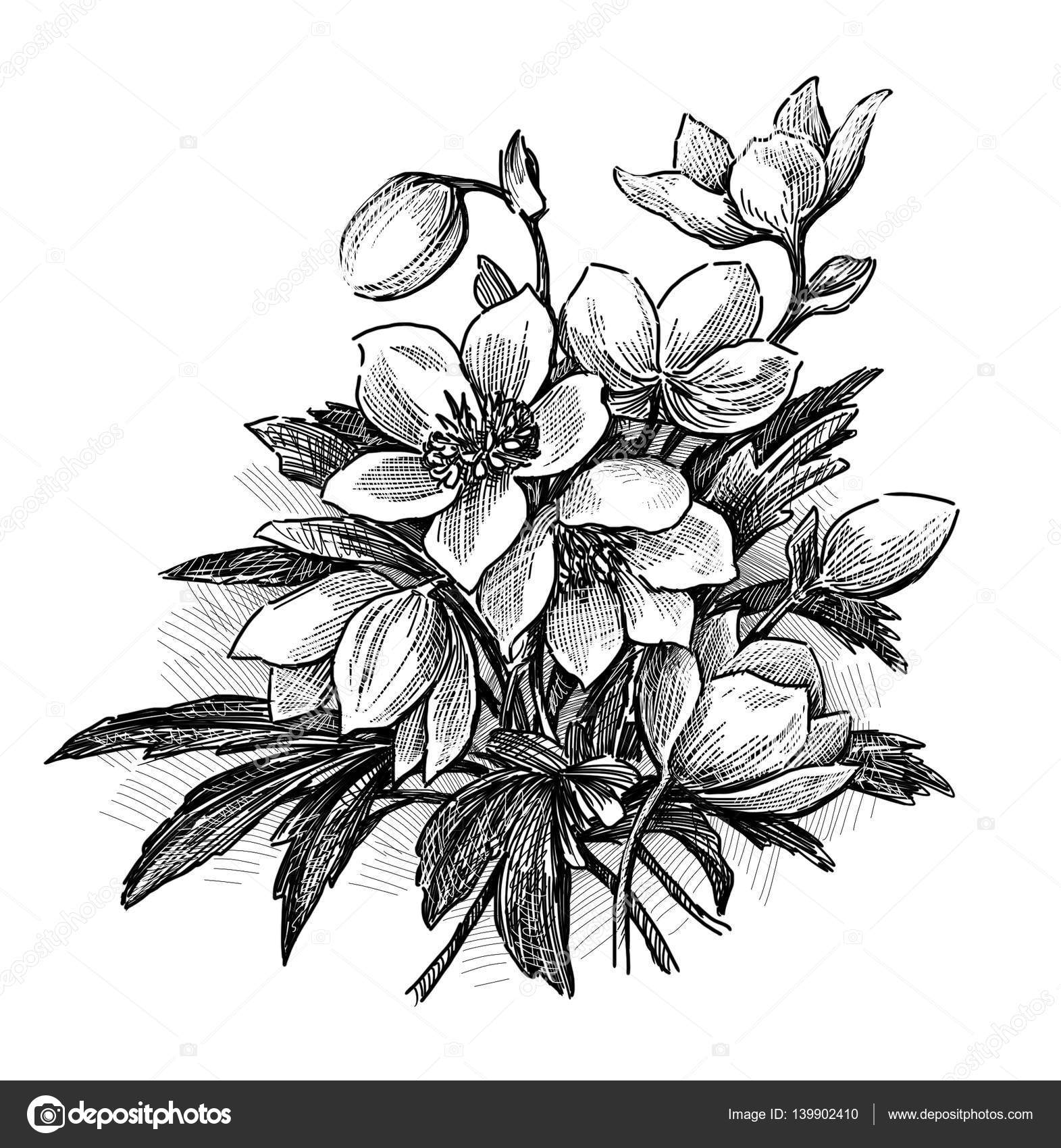 Sketch Of A Bouquet The Spring Flowers Stock Photo 139902410