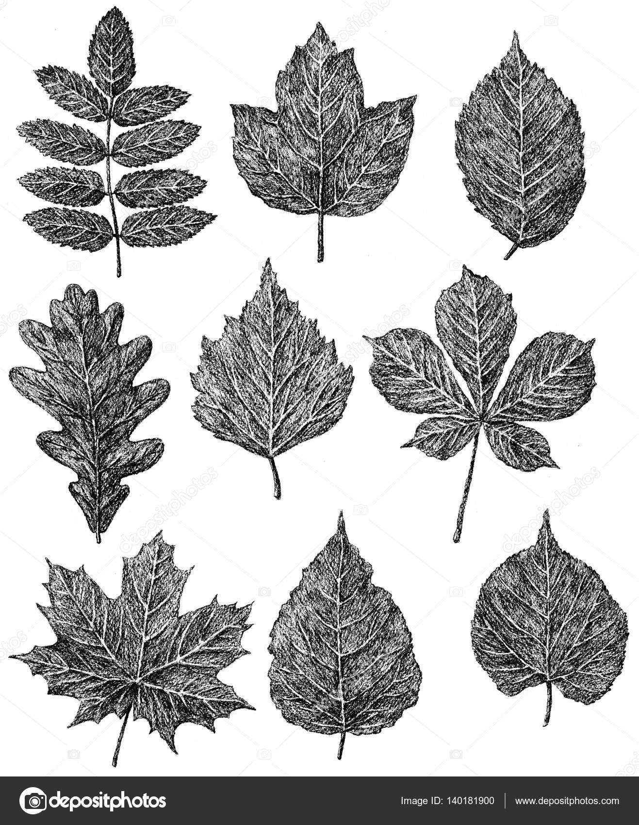 Mano Dibujos De Los árboles Caen Hojas Fotos De Stock Mubaister