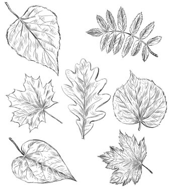 sketches of the falling trees leaves