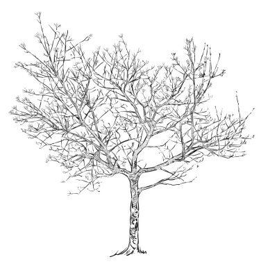 Sketch of a tree in the spring