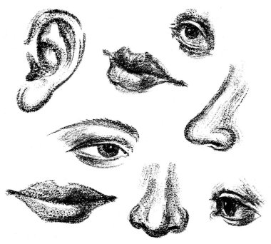 Sketches of the fragments of the human face