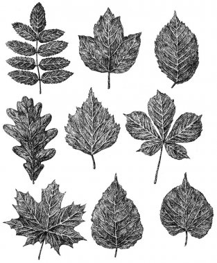 hand-drawings of the falling trees leaves