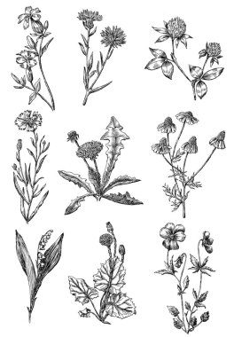 sketches of the wild flowers