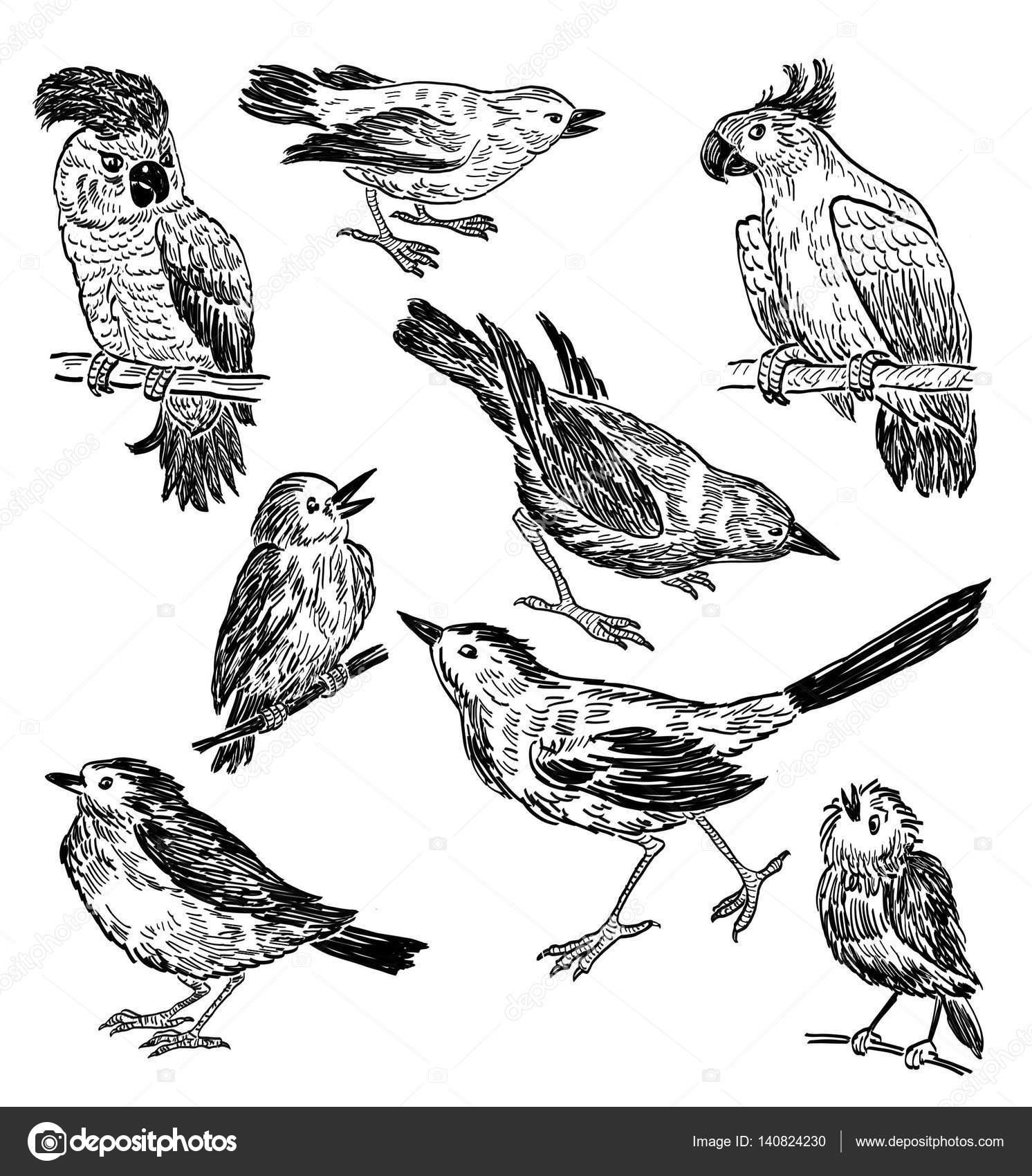 Disegni a matita di diversi uccelli selvatici foto stock - Semplici disegni di uccelli ...