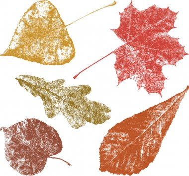the autumn leaves of the different trees