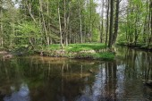 Fotografie Neusalza Spremberg Spree in saxon in spring