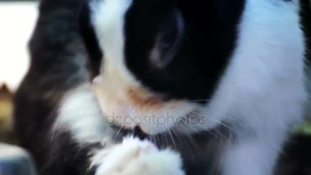 Černý a bílý králíček ranní koupání