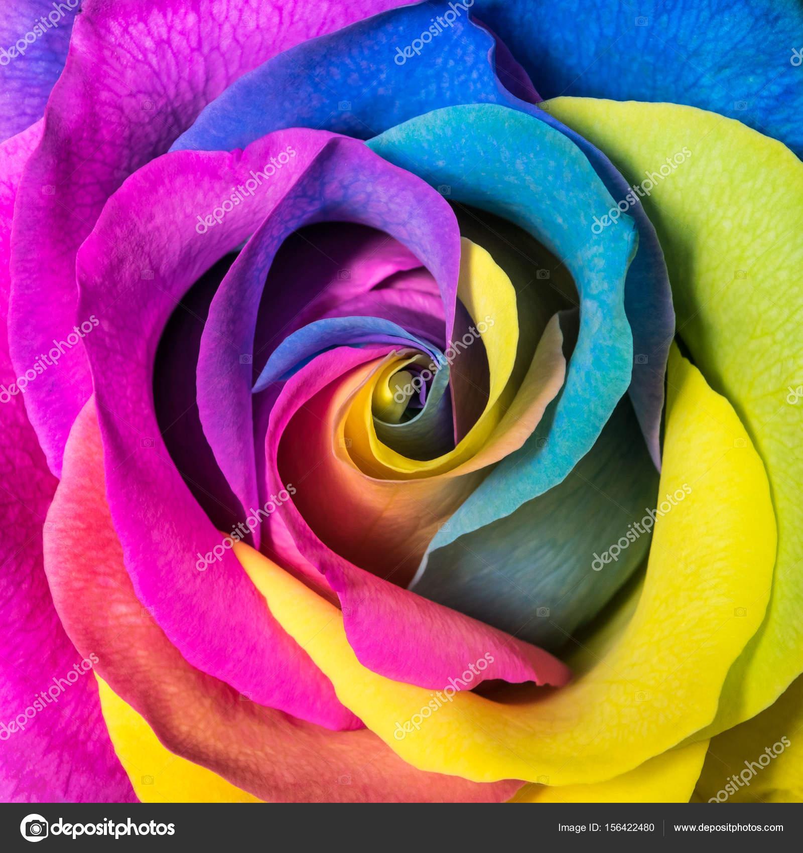 Fond De Belle Fleur Rose Multicolore Photographie Alexbr C 156422480