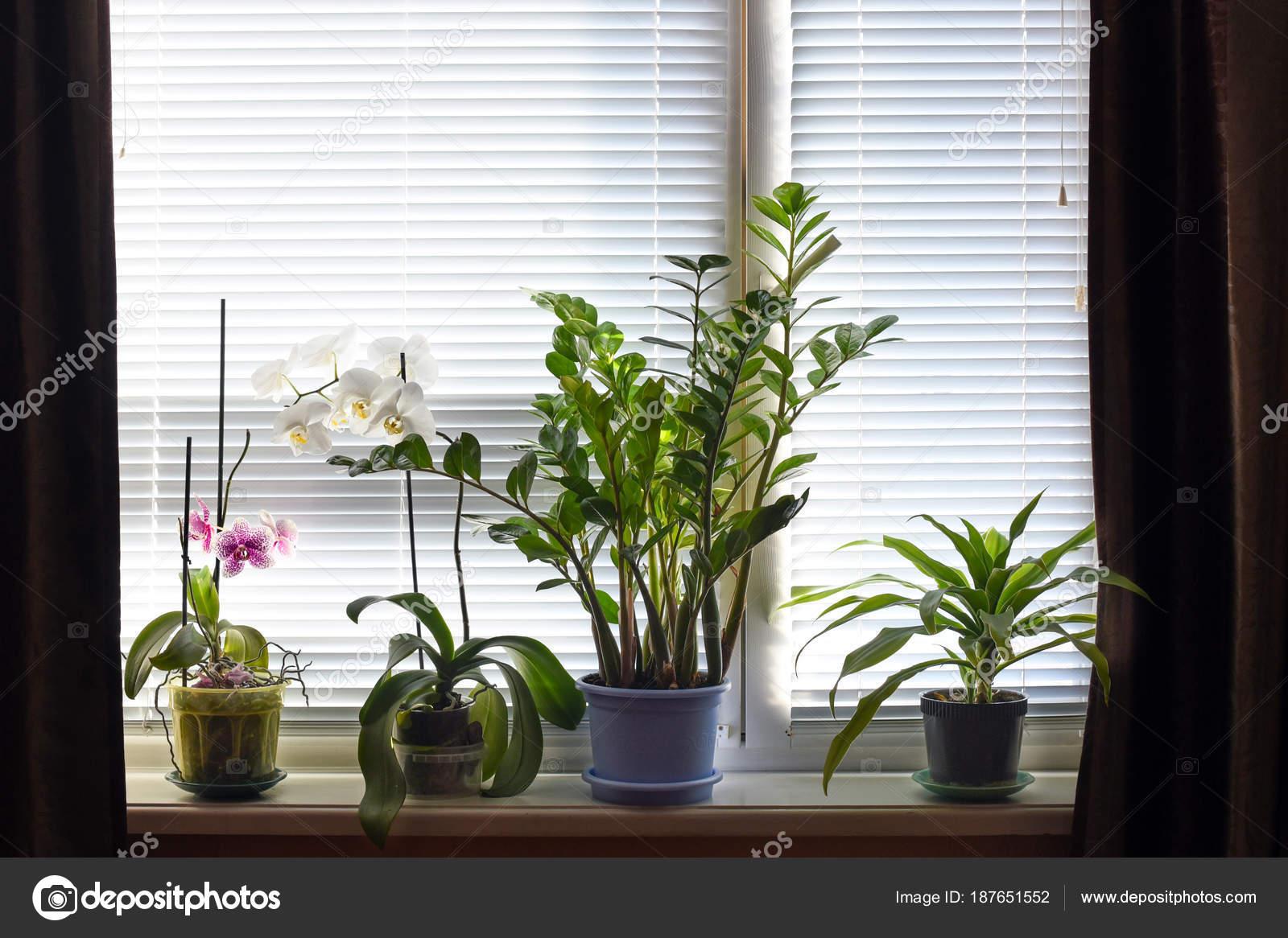 Davanzale una finestra con molti vasi piante camera esso u foto