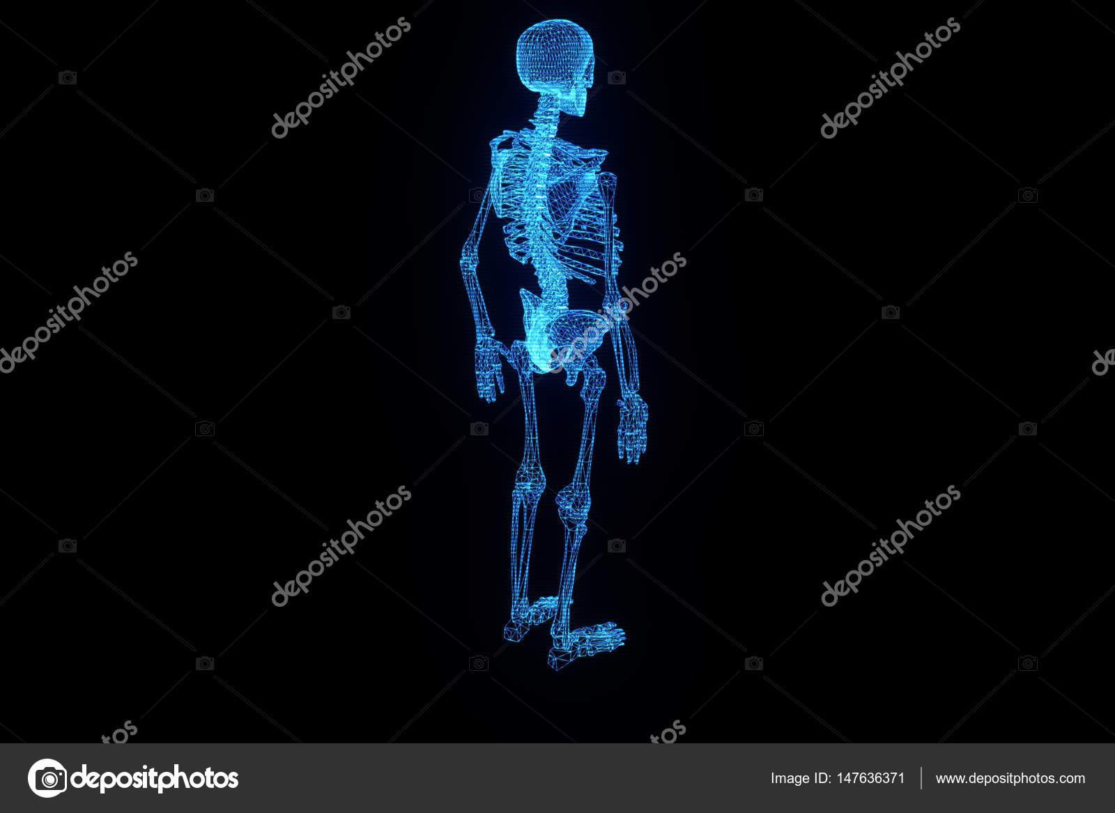 Human Skeleton Wireframe Hologram in Motion  Nice 3D