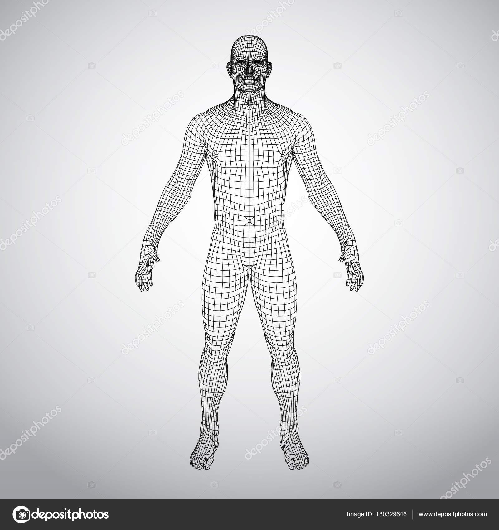 Wire Frame menschlichen Körper. Polygonalen 3D-Modells auf weißem ...