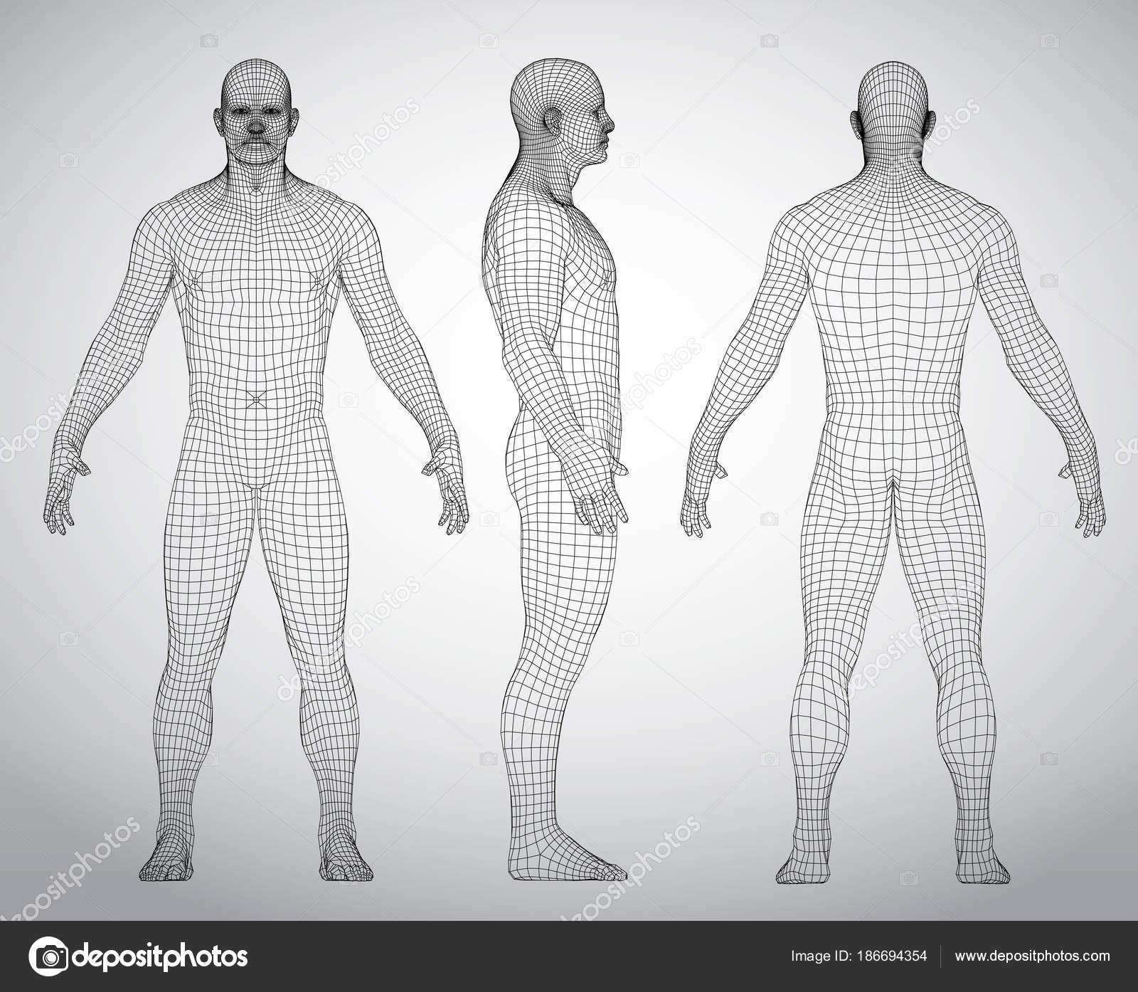 Satz von 3d Wire Frame menschlichen Körpers Vektor-Illustration ...