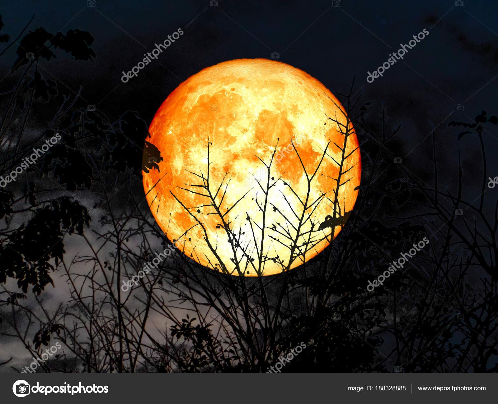 Super voll Blut Mond zurück Silhouette trockenen Baum Grauton Wald ...