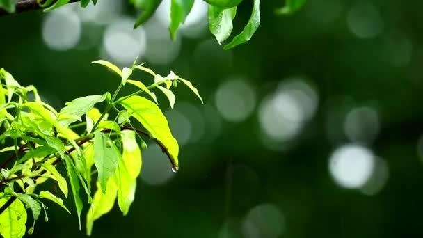 kapka deště v zahradě a rozmazané zelené pozadí větev pohybující se větrem a slunečním svitem 1