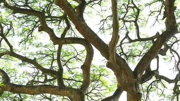 silné sluneční světlo odpoledního a zeleného listí a větve na stromě v zahradě
