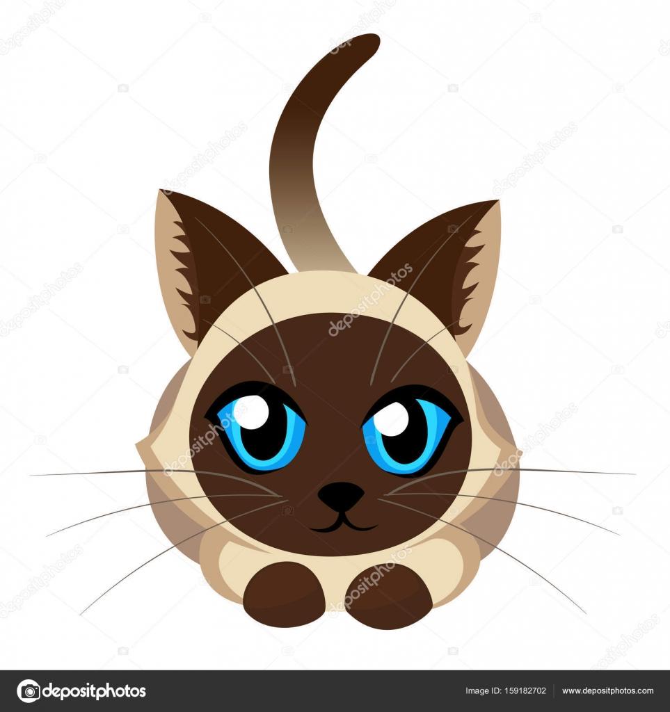 シャム猫ふわふわむら白地に青い目を持つ素敵な子猫ペット猫犬かわいい