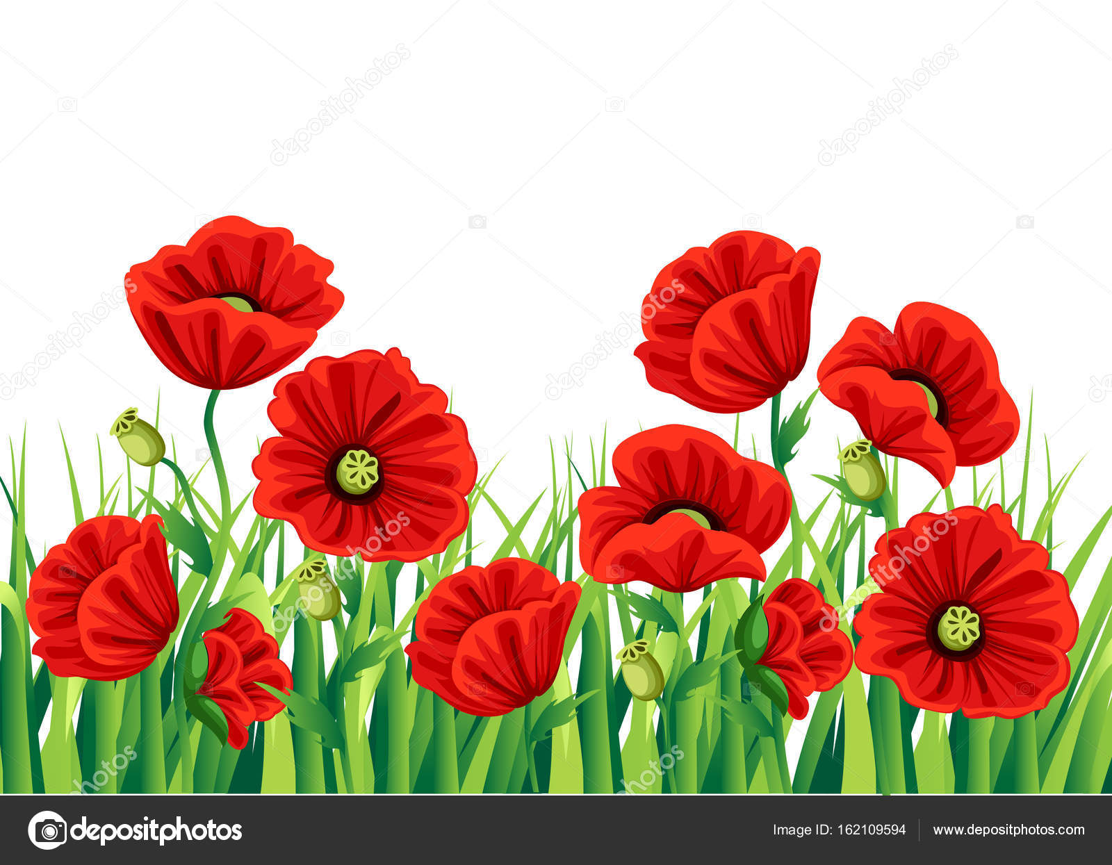 Red poppy flower isolated on white background vector red romantic red poppy flower isolated on white background vector red romantic poppy flowers and grass mightylinksfo Choice Image
