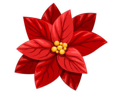 Beautiful red Poinsettia flower Christmas decoration christmas ornament vector illustration isolated on white background web site page and mobile app design.