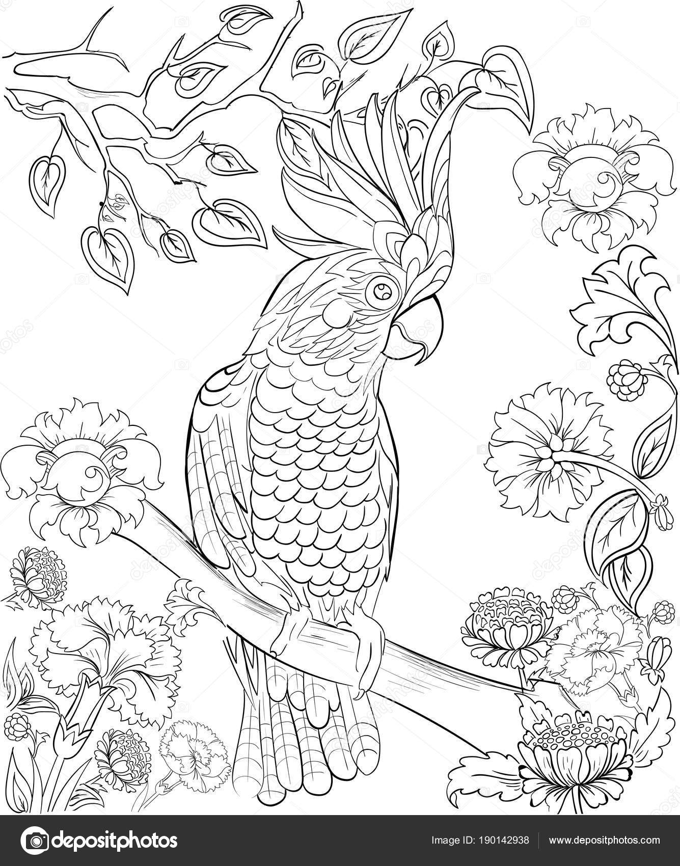 Cockatoo Parrot For Coloring Book Anti Stress Adult Tattoo Stencil