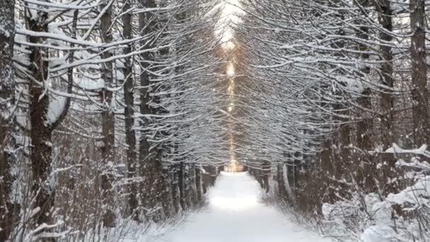 Passerella coperta di neve di inverno bella paesaggio nei boschi