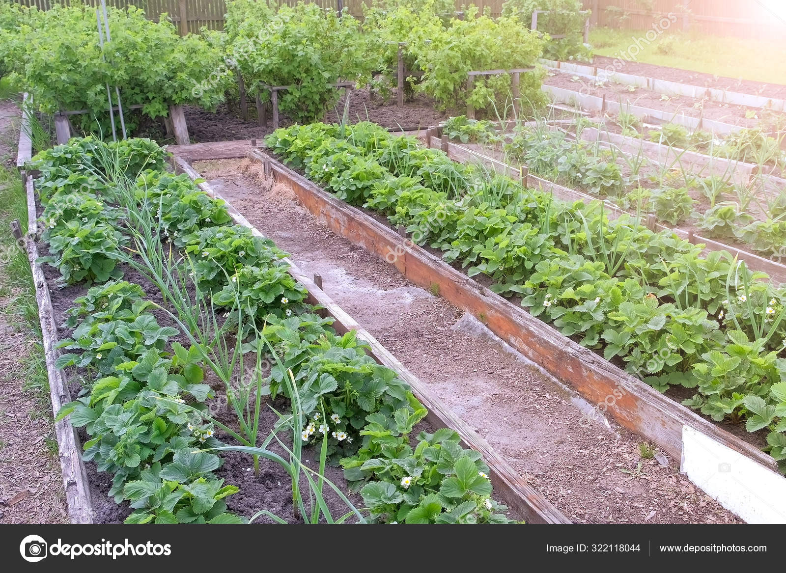 Farm Homestead With Garden Beds Landings Onion Strawberry And Berries Bushes Stock Photo Image By C Familylifestyle 322118044