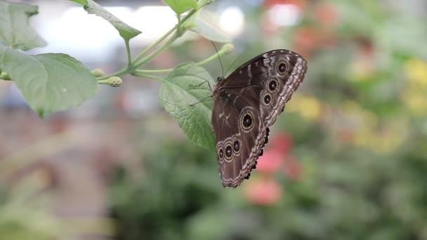 Motýl sedí na listě keře ve větru