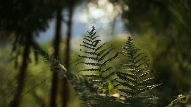 Fern odjíždí v pozadí potok lesní krajina