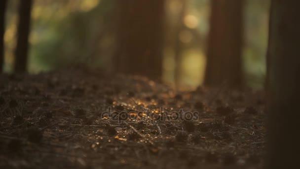 hmyz hemží v proudu slunce na trávě, oříznout baldachýn