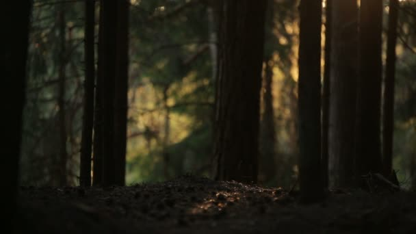 Tajemný les chrlily duhové ve slunečním světle