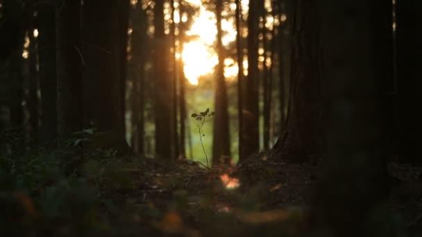 plantleat výhonek nebo malý malý strom v kouzelný les