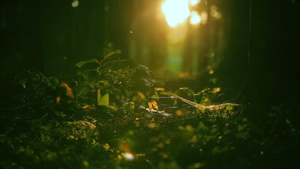 magic forest, sun playing in the grass, insects swarming in the grass