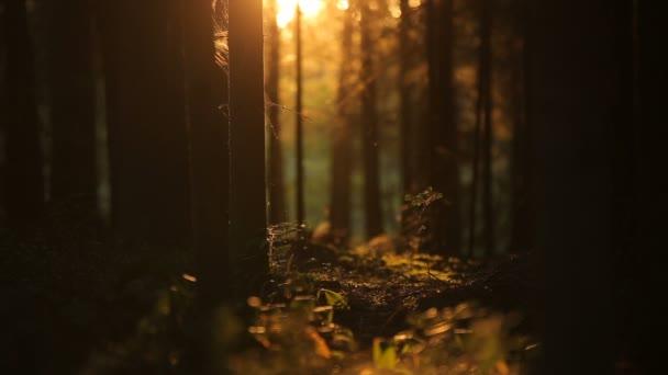 slowmotion hmyz hemží v tajemný les na slunci