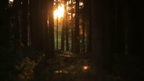 timelapse romantický západ slunce v kouzelný les s hmyz hemží ve slunečním světle