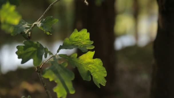 Young sprout and oak leaves illuminated by the warm summer sun at the background of flowing stream forest landscape focus transition