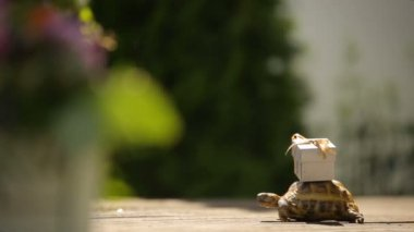 turtle with miniature surprise gift on a shell - reception wedding decorations advertising footage for logo