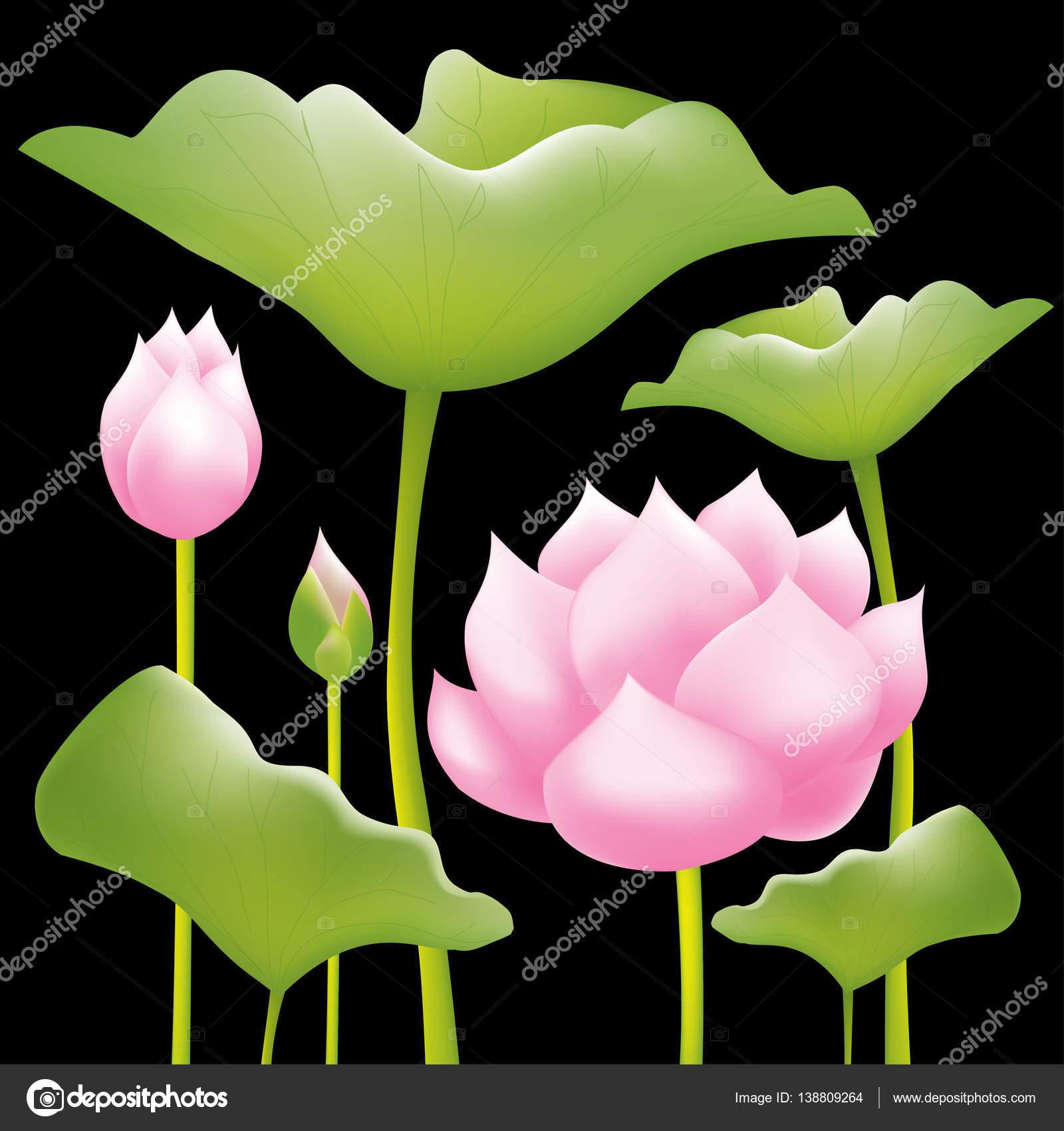 Beautiful Pink Water Lilies Or Lotus Flowers On Black Background