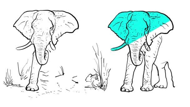 Sloní osnovy animovaná ilustrace